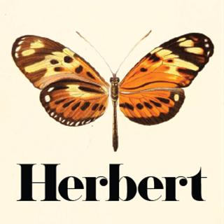 Herbert - Noosa Heads