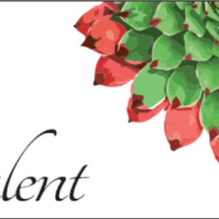 Succulent - Hobart