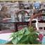 v1935 Mediterranean Tastes - Athens (2)